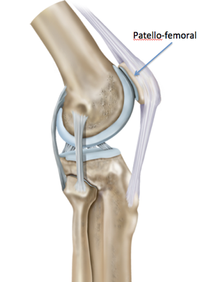 Diagram of the knee from the side