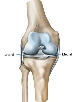 Diagram of the knee from the front