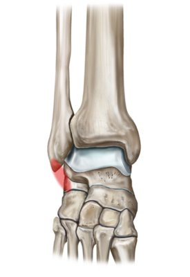 Lateral Ligament