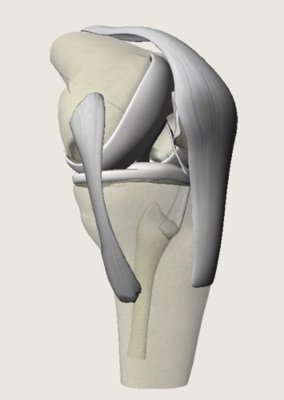 diagram of knee joint